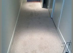 Green Clean Carpet Care